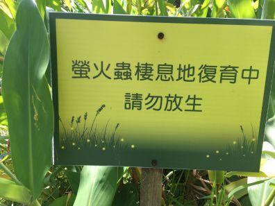 Firefly habitat in Daan Forest Park